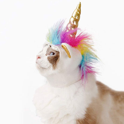 cat unicorn hat