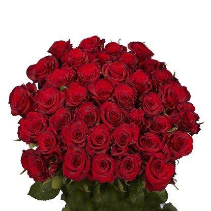 fresh cut roses gift
