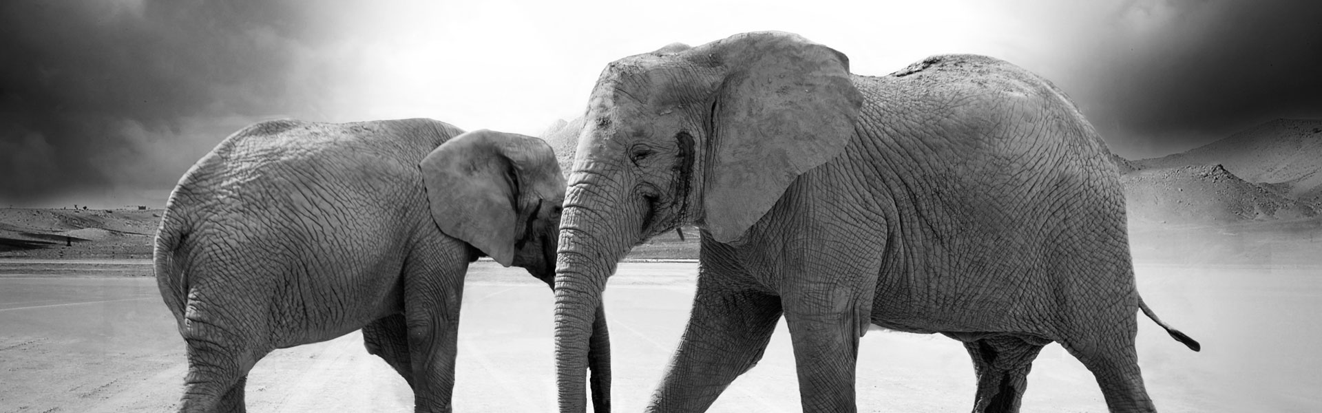 white elephant gift ideas cover