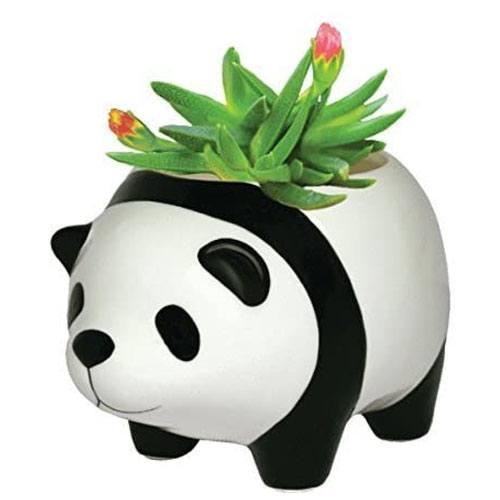 panda plant pot gift