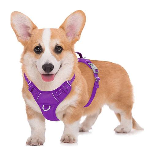 dog harness gift idea