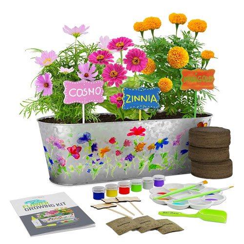 plant flower growing kit