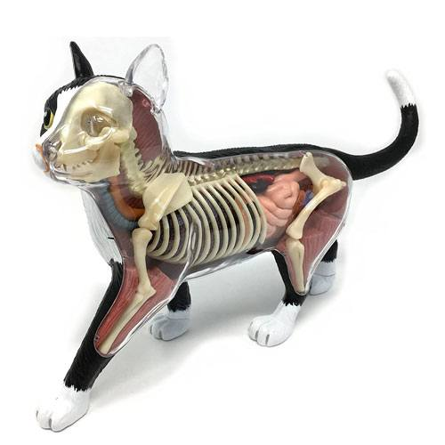 cat anatomy model artwork