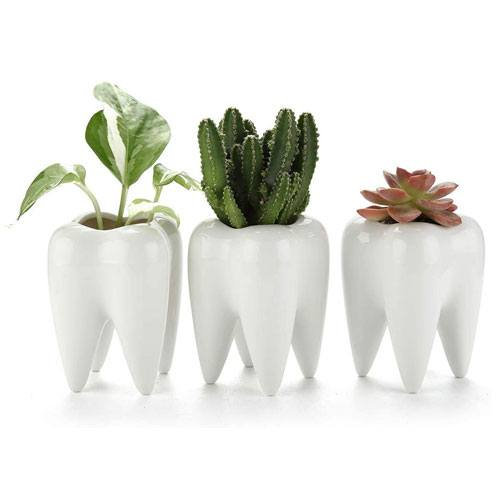 tooth succulent pots