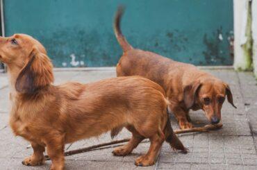 dachshund gift ideas